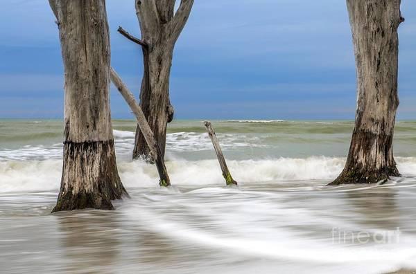 Photograph - Ocean Stumps by Karin Pinkham