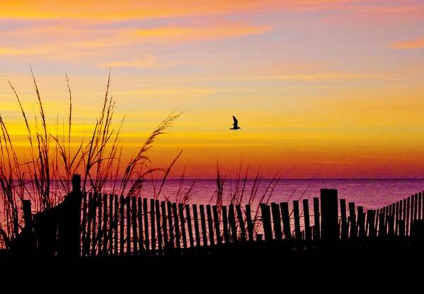 Ocean Sunrise Art Print