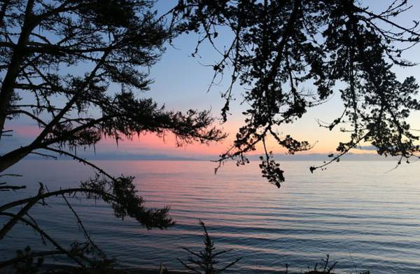 Photograph - Ocean Sunset Thru The Trees  by Christy Pooschke