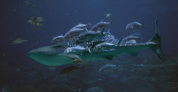 Blue Angels Photograph - Ocean Treasures by Betsy Knapp