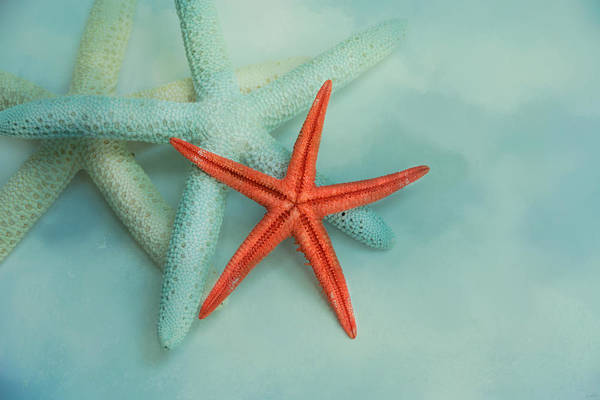 Three Seashells Photograph - Ocean Treasures by Jai Johnson