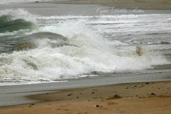 Photograph - Ocean Waves 4 by Captain Debbie Ritter