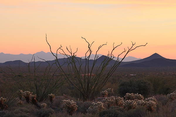 Photograph - Ocotillo Sunset  by Christy Pooschke