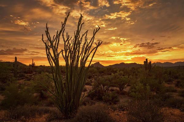 Silhoutte Photograph - Ocotillo Sunset In The Sonoran  by Saija Lehtonen