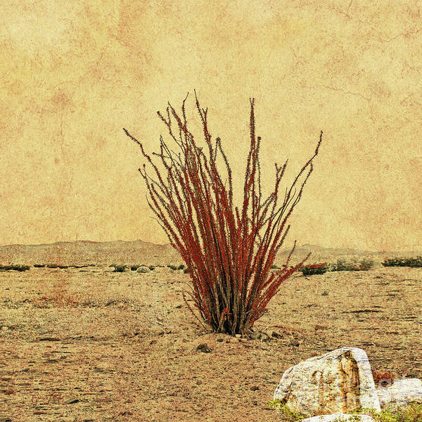 Shrub Mixed Media - Ocotillo - The Desert Coral by Gabriele Pomykaj