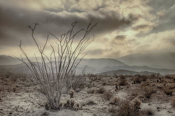 Ocotillo Wall Art - Photograph - Ocotillo With Storm Clouds by Joseph Smith