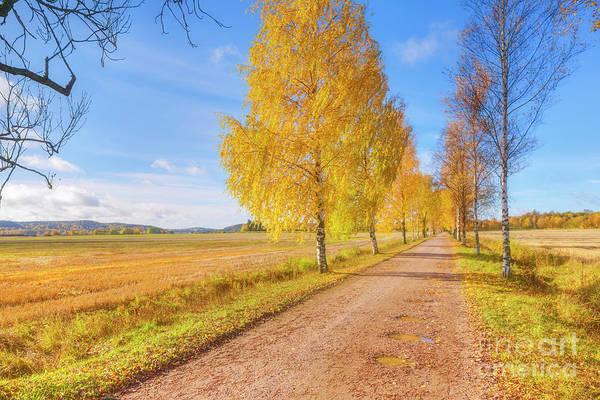 Birch Photograph - October Countryside 2 by Veikko Suikkanen