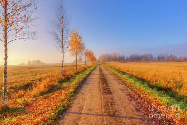 Birch Photograph - October Countryside 4 by Veikko Suikkanen