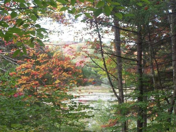 Haines Falls Photograph - October Lake View by Sharon Langdon