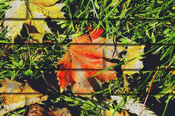 Photograph - October Leaf D Fine Art by Jacek Wojnarowski
