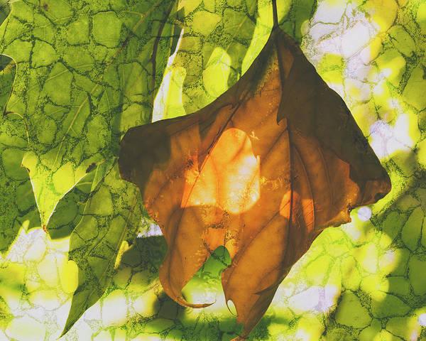 Photograph - October Leaf E Fine Art by Jacek Wojnarowski