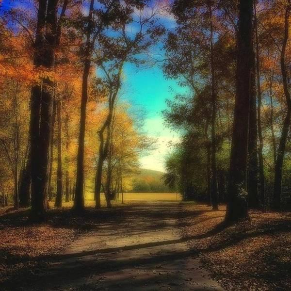 Color Digital Art - October Path by Steven Gordon