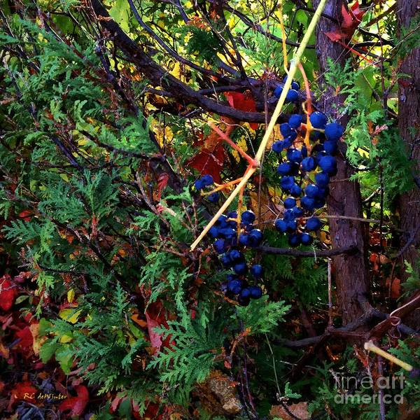 Painting - October Potpourri by RC DeWinter