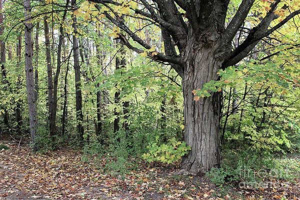 October Trees Art Print