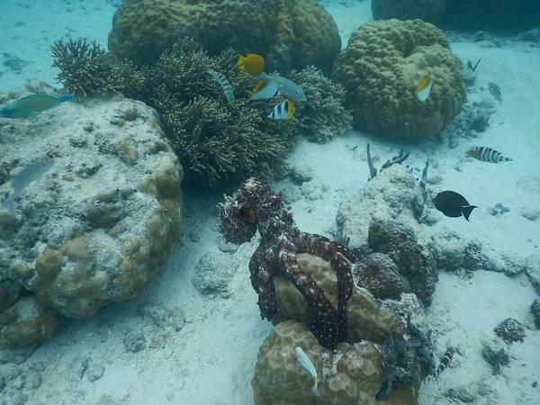 Photograph - Octopus Reef 3 by Michael Scott