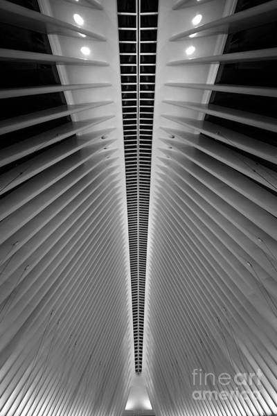 Oculus Wall Art - Photograph - Oculus Eyes by Michael Ver Sprill