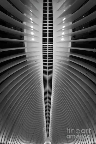 Oculus Wall Art - Photograph - Oculus Spine  by Michael Ver Sprill