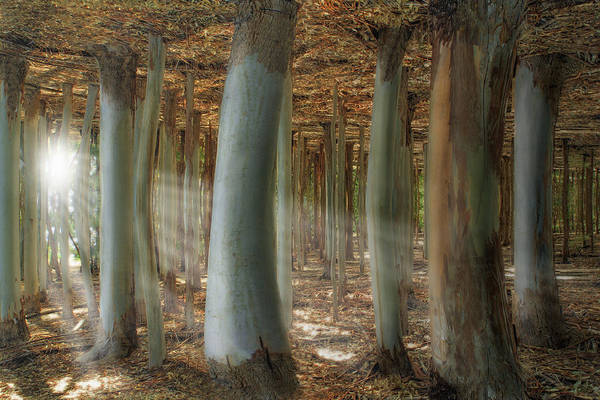 Wall Art - Photograph - Odd Forest by Melanie Viola