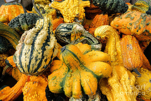 Cucurbitaceae Photograph - Odd Gourds Two by Olivier Le Queinec