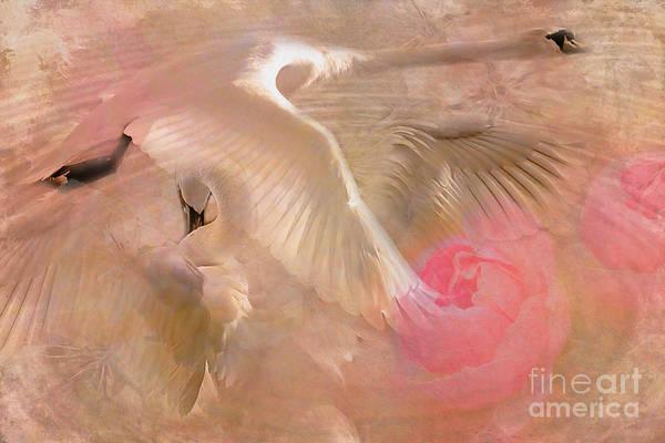 Digital Art - Ode To A Swan 2015 by Kathryn Strick