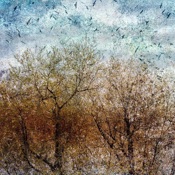 Photograph - Of Birds And Trees 2 by Bob Orsillo
