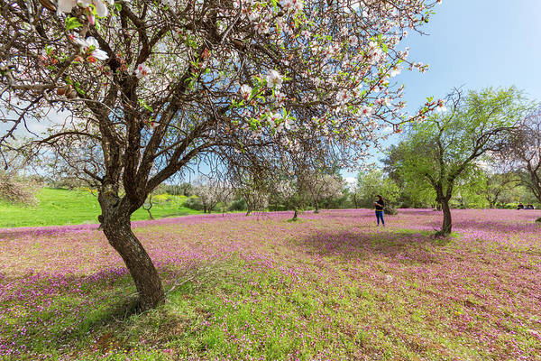 Nature Wall Art - Photograph - Of Blossoming Almond Trees And Purple Flowers by Iordanis Pallikaras