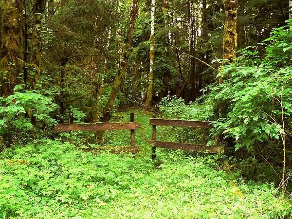 Photograph - Off The Beaten Path Haida Gwaii Bc by Barbara St Jean