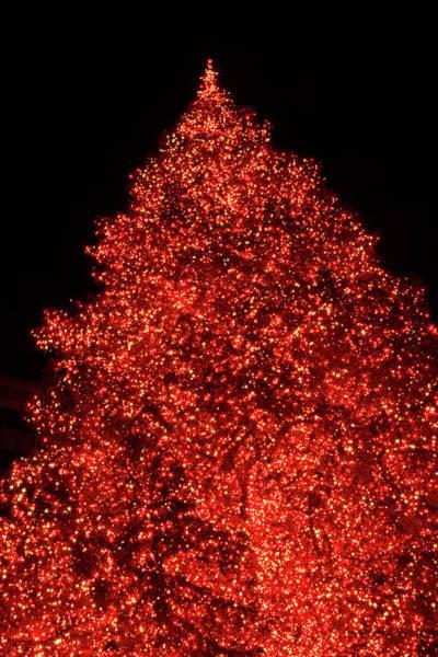 Photograph - Oh Christmas Tree by Bonnie Follett