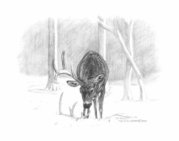 White Tailed Deer Drawing - Oh Dear by Meridith Johnson