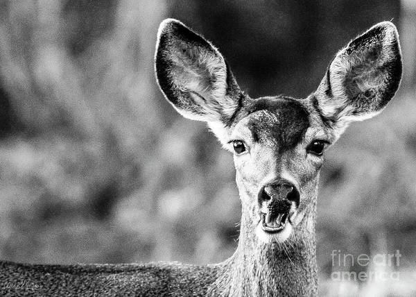 Oh, Deer, Black And White Art Print