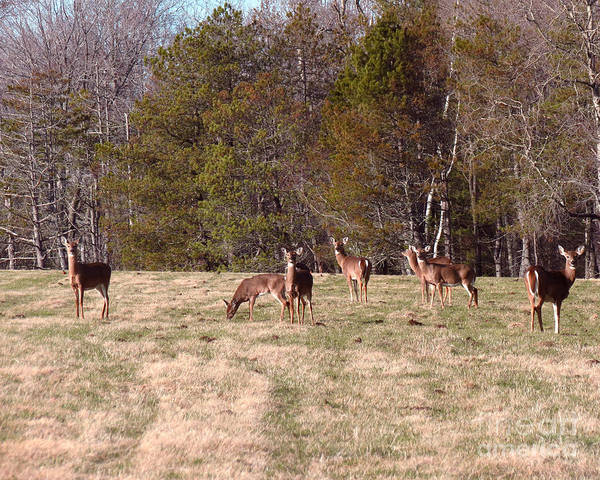 Photograph - Oh Deer by Donna Cavanaugh