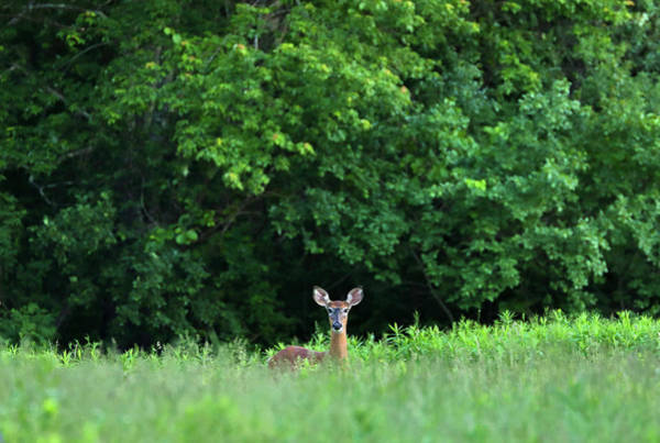 Photograph - Oh Deer by Juergen Roth
