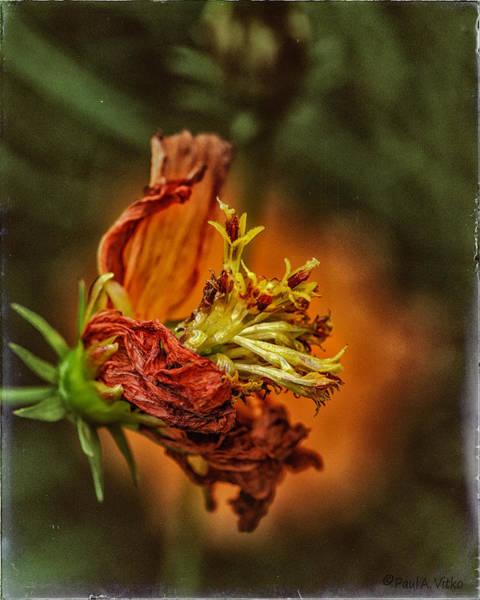 Photograph - Oh Orange Juice by Paul Vitko