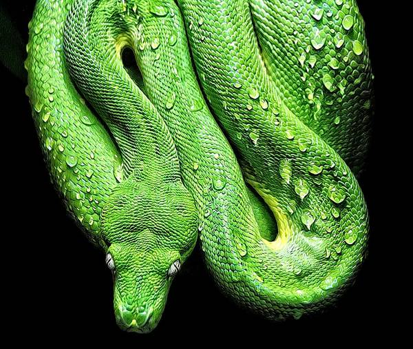 Photograph - Oh So Green Viper by Alice Gipson