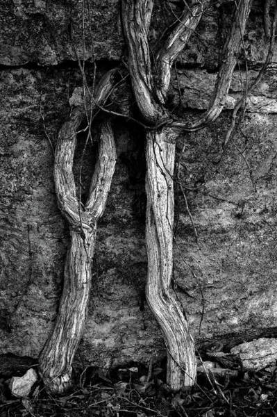 Spider Rock Photograph - Oh Why Bw by Lesa Fine