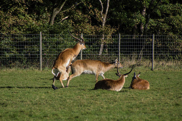 Photograph - Ohh Naughty Deer by Doc Braham