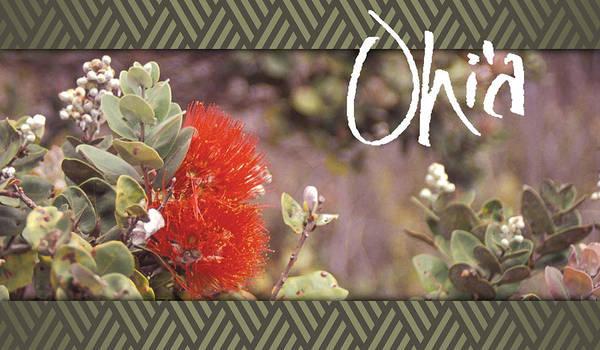 Ohia Photograph - Ohia Lehua by Howard Pacheco