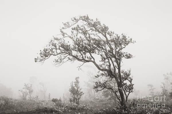 Ohia Photograph - Ohia Lehua Tree by Greg Vaughn - Printscapes