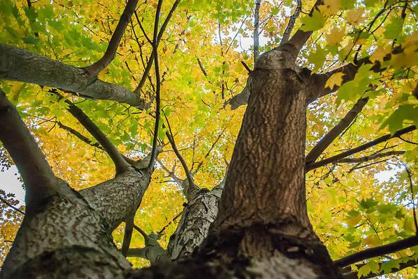Photograph - Ohio Pyle Colors - 9687 by G L Sarti
