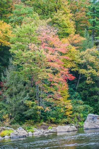 Photograph - Ohio Pyle Colors - 9709 by G L Sarti