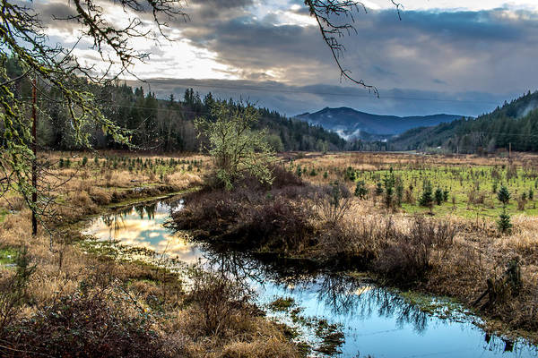 Photograph - Ohop Creek by Rob Green