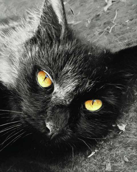 Photograph - Ojos De Gato Negro by Alice Gipson