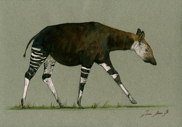 Wall Art - Painting - Okapi Art Watercolor Painting by Juan  Bosco