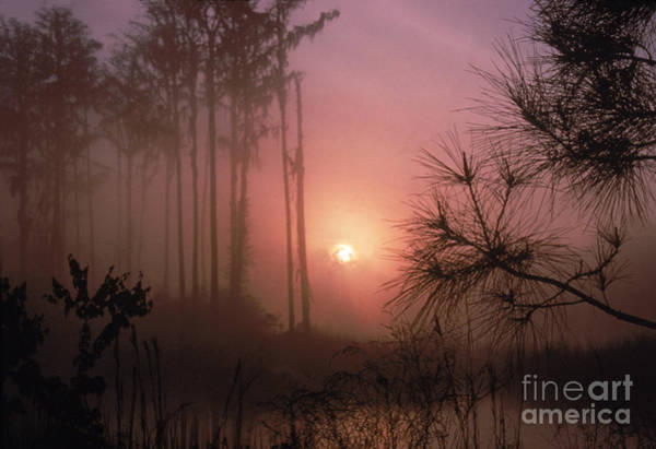Photograph - Okefenokee Swamp by Andrew Rakoczy