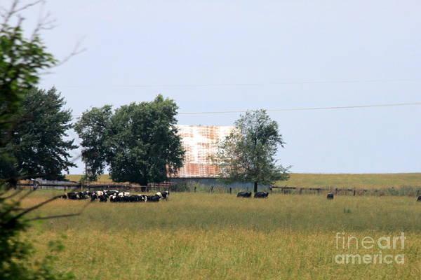 Wall Art - Photograph - Oklahoma Cattle Farm by Eric Irion