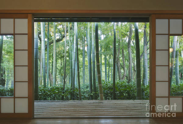 Okochi Sanso Villa Bamboo Garden Art Print by Rob Tilley