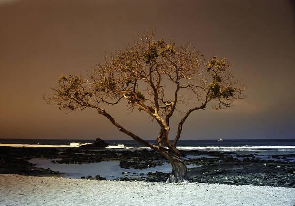 Photograph - Old A Beach by Randy Sylvia