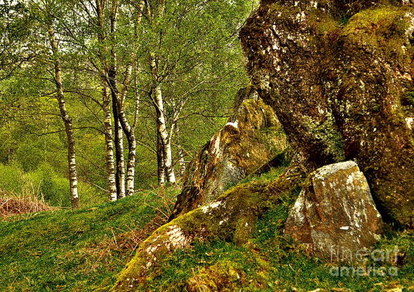 Photograph - Old And New Trees by Martyn Arnold