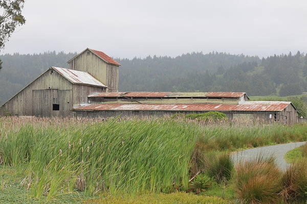 Photograph - Old Barn  by Christy Pooschke