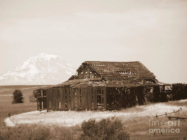 Photograph - Old Barn With Mount Adams In Sepia by Carol Groenen